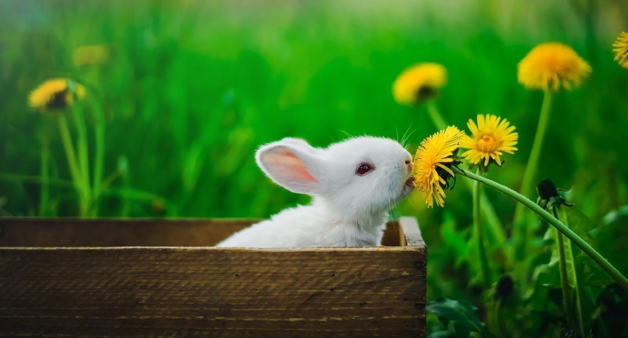 Sin hacerle conejo a la sostenibilidad